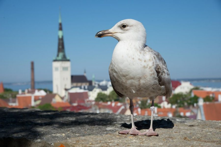 13th Nordic Experience Meeting – NACT – Tallinn – May 23-25, 2018